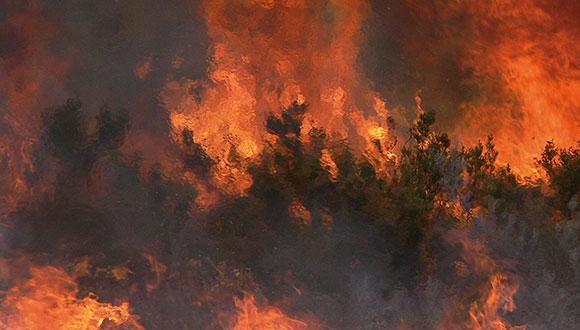 Què hem après dels grans incendis del 1994
