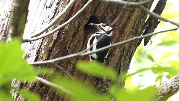 Els serveis ecosistèmics que ens ofereixen els boscos