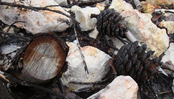Bosc Cremat