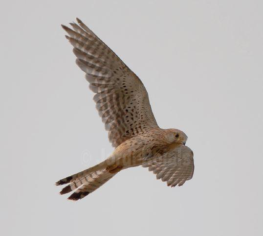 2009 - Aturem la pèrdua de biodiversitat