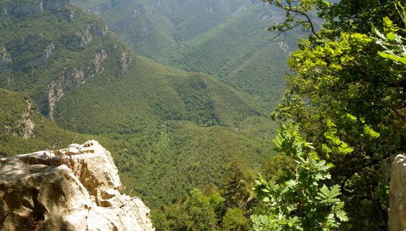 Boscos i Canvi Global: de la Recerca a la Gestió adaptativa