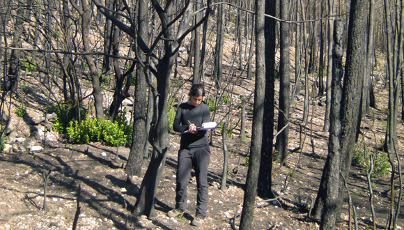 Serveis de gestió d'incendis forestals