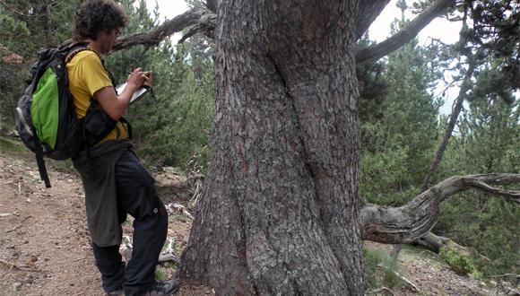 Inventari Forestal Nacional