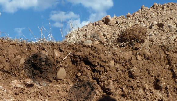 Diversitat microbiana del sòl