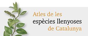 Atles de les espècies llenyoses de Catalunya