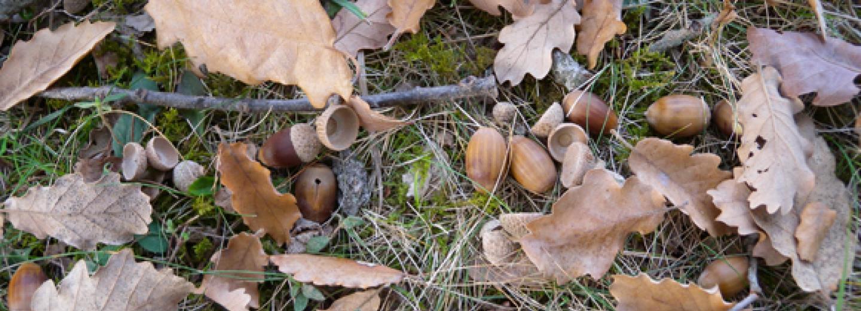 Efectes de la sequera en les interaccions vegetació-sòl i en l'estabilitat de l'ecosistema