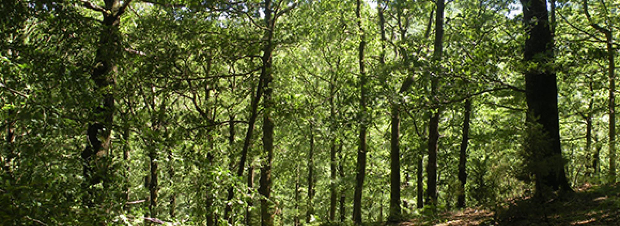 Indicadors de gestió forestal sostenible: aplicació i recerca