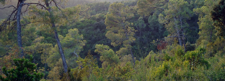 Boscos de Collserola