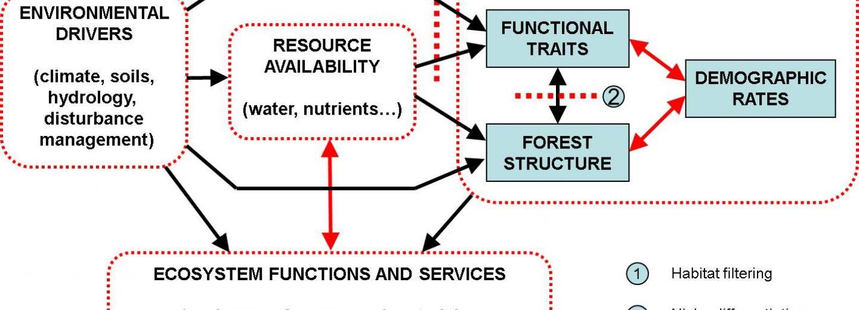 Marc proposal per estudiar la relació entre factors ambientals, disponibilitat de recursos, dinàmica de les comunitats i funcionament i serveis ecosistèmics.
