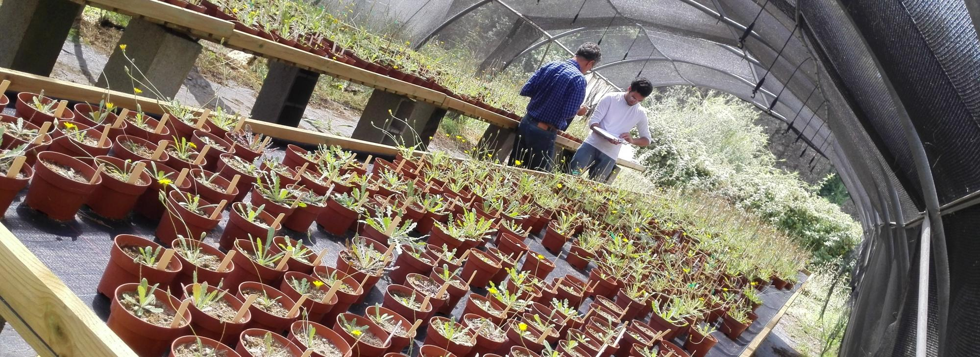 Adaptació de les poblacions vegetals durant les expansions de l'àrea de distribució