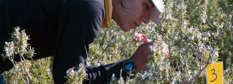 impacte potencial de les explotacions apícoles en la disponibilitat de recursos florals