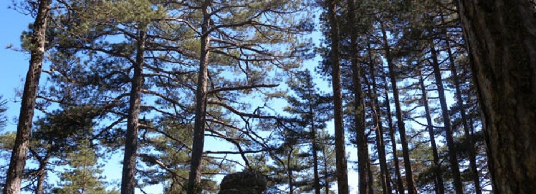 Recerca integrada sobre resiliència i gestió forestal al mediterrani