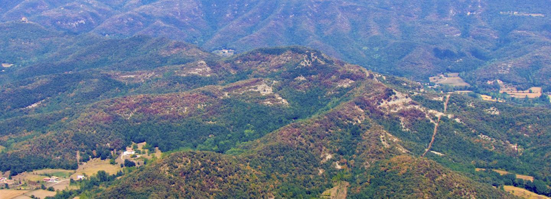 Avaluació i predicció dels serveis ecosistèmics dels boscos